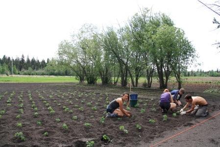 Meadow Creek Farms