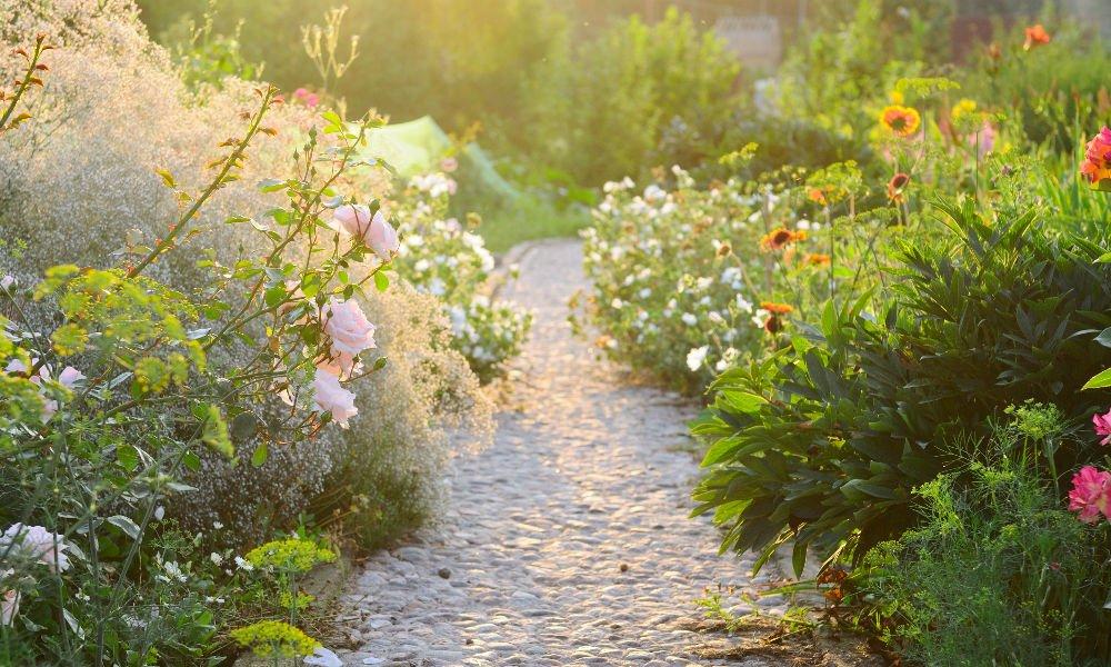 SOIL APPRECIATION: TIPS FOR PLANTING PERENNIALS IN FALL