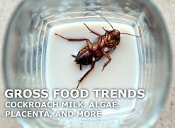 gross food trends cockroach milk
