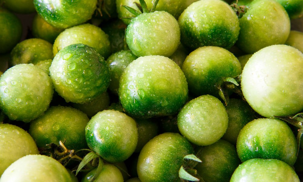 HAVE TOO MANY GREEN TOMATOES ON YOUR HANDS?