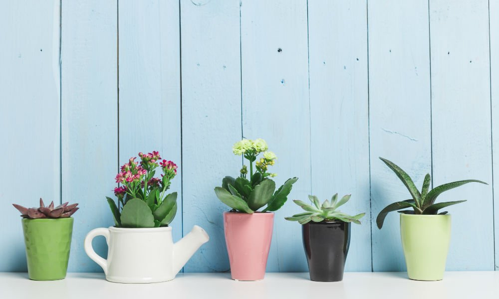 5 HOUSEPLANTS FOR HEALTH & WHERE TO PUT THEM