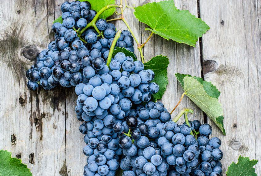coronation grapes