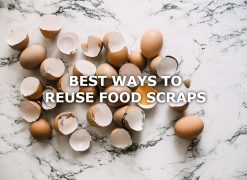 reuse food scraps eggshells