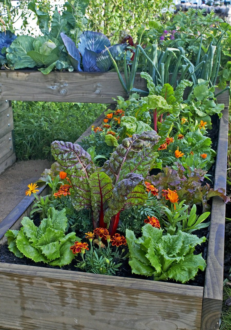 How and why you should start composting in your backyard. #gardening