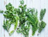 leftover herbs