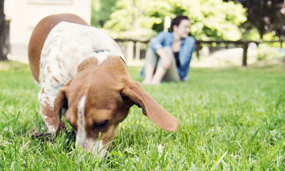 5 EASY WAYS TO GREEN YOUR PET CARE THIS EARTH DAY