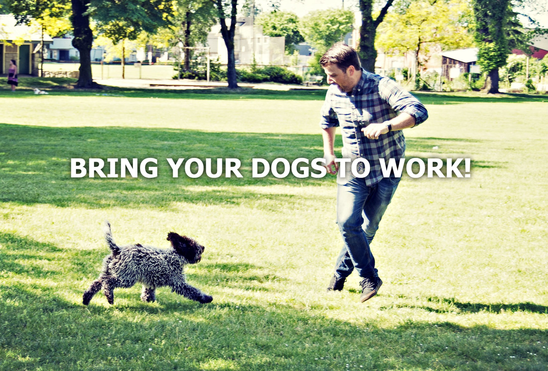 YOUR WORKPLACE REALLY NEEDS TO BE DOG PAWTHORIZED