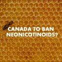 CANADA BANS NEONICOTINOIDS