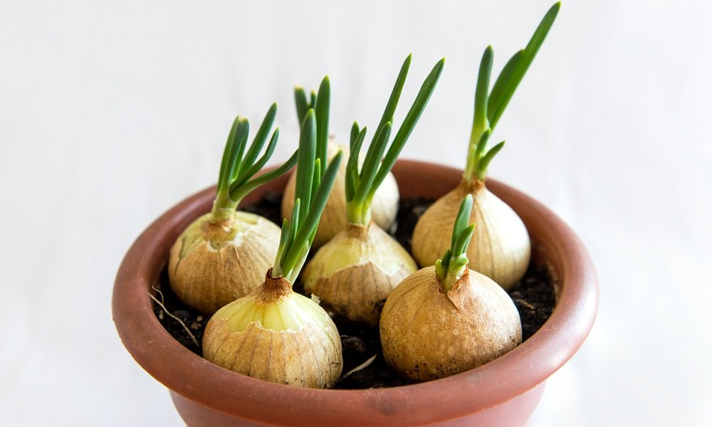 10 VEGETABLES YOU CAN REGROW FROM SCRAP