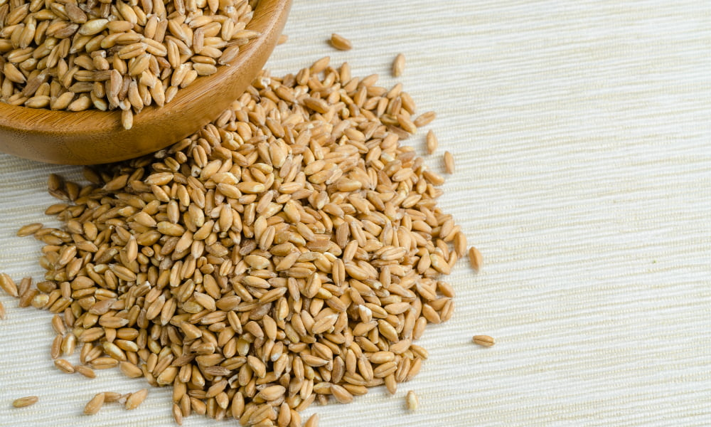 FARRO VS. WHEAT BERRIES: WHICH IS THE BETTER ANCIENT GRAIN?