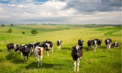 Grass-fed Milk