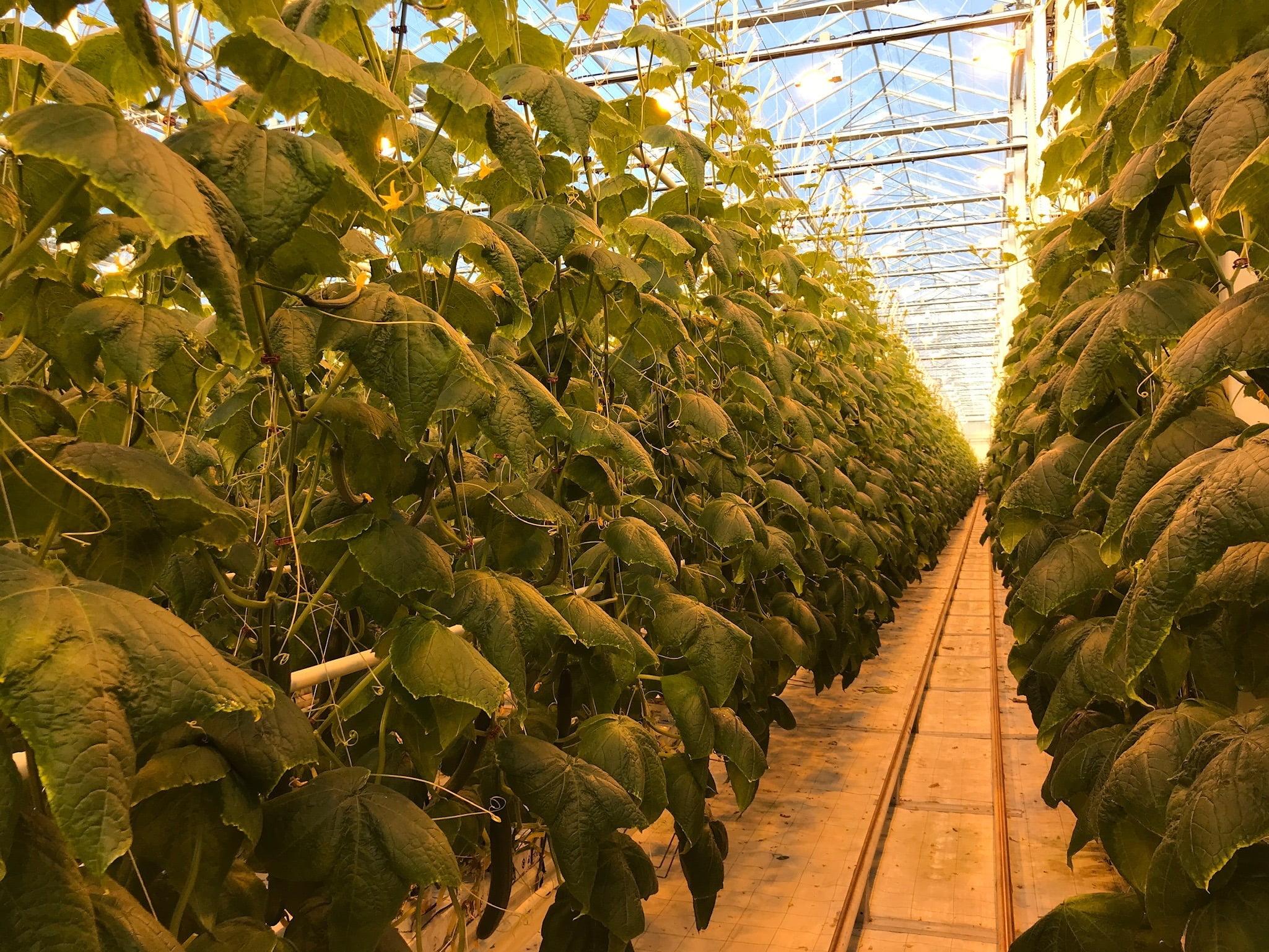 Doef's Greenhouses