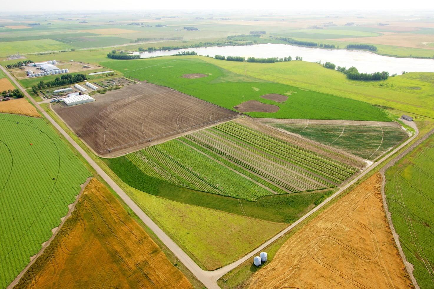 Mans Organics Farm
