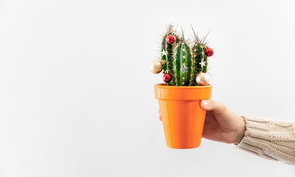 house plants christmas