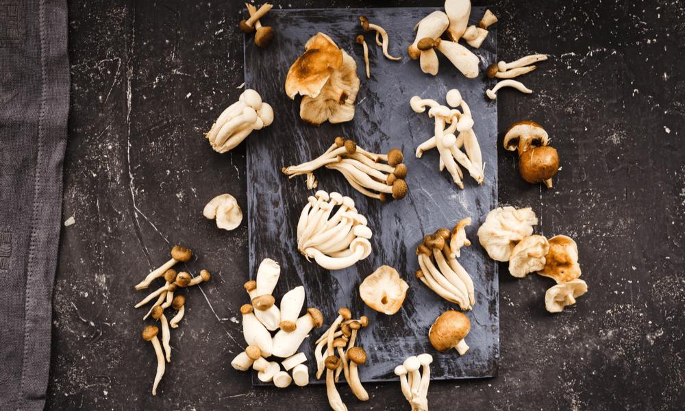 mixture of mushrooms
