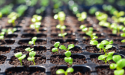 Seeds To Start In March-blog