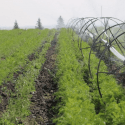 Poplar Bluff Irrigation